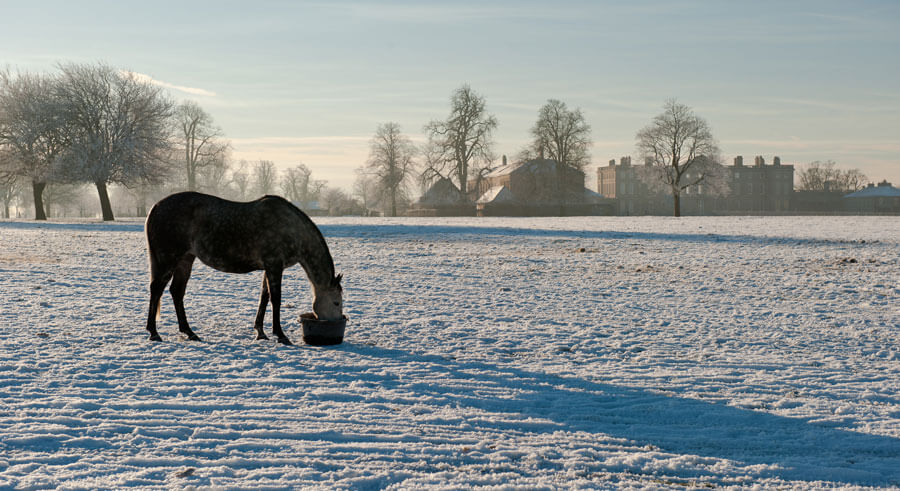 Horses in the snow, Cottesmore, Rutland