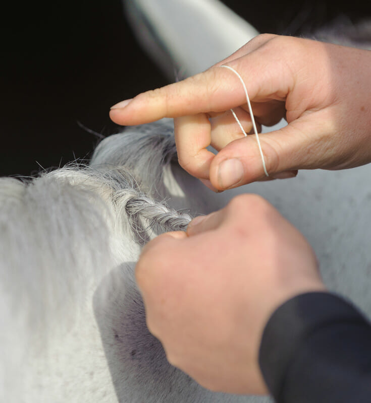 plaiting a grey mane - Supreme Products