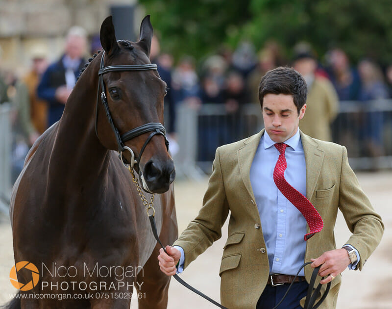ben way and galley light - Badminton 2015 - The first inspection