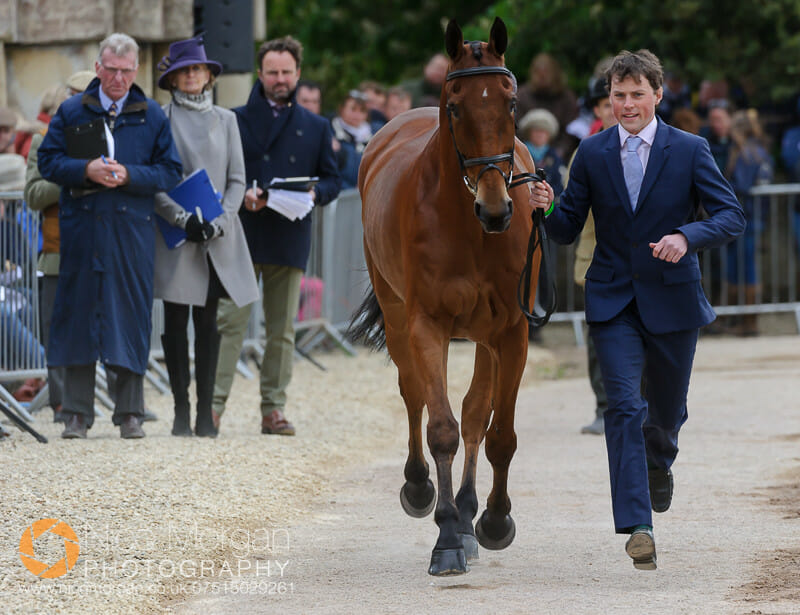 sam watson and horseware bushman - Badminton 2015 - The first inspection
