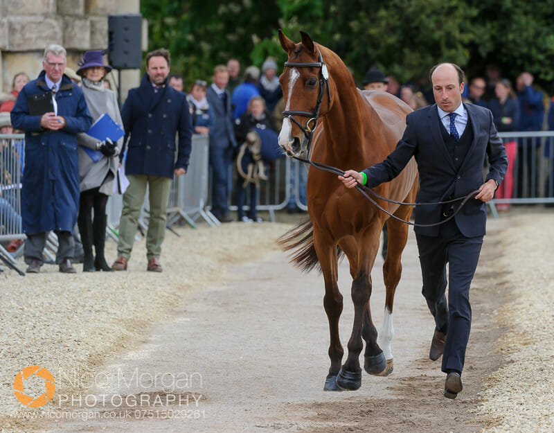 tim price and ringwood sky boy - Badminton 2015 - The first inspection