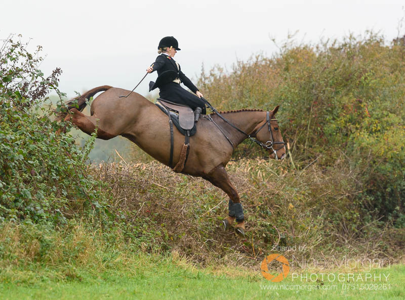 Jumping a hedge near Clawson Thorns sidesaddle