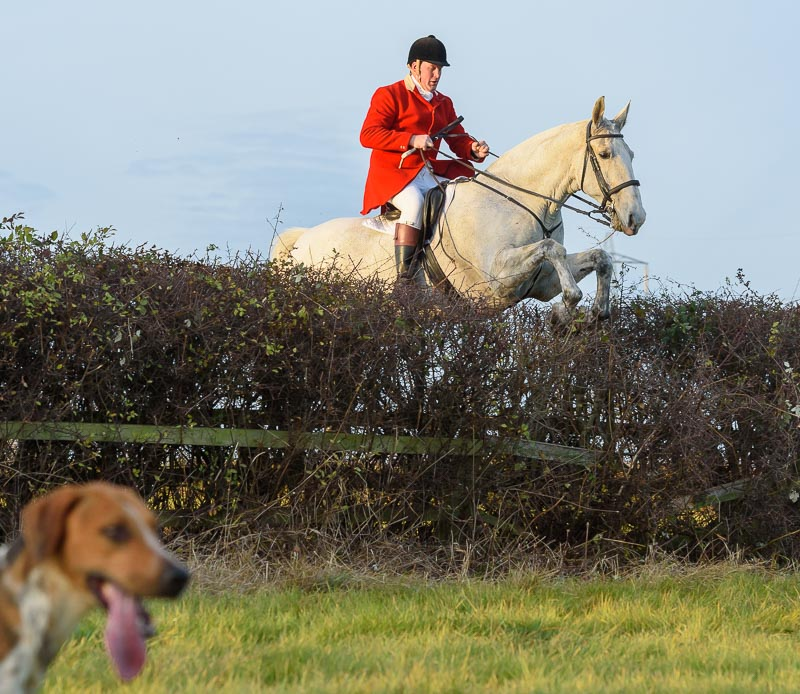 Jumping the last hedge