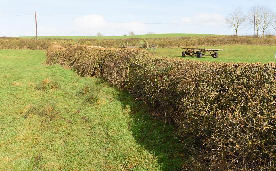 Another hedge alongside the road. Take off side.