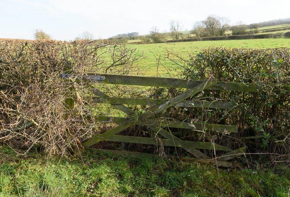 Another hedge and gate alongside the road. Take off side.