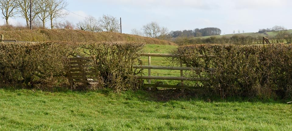 Another hedge close to the road (to the left), take off side.