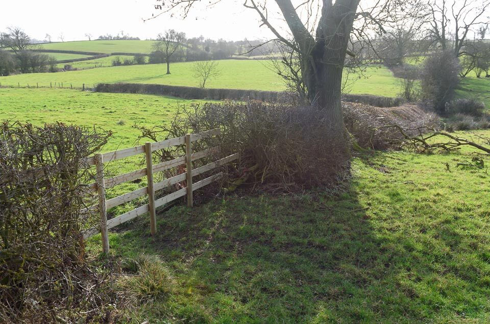 Another hedge close to the road, take off side.