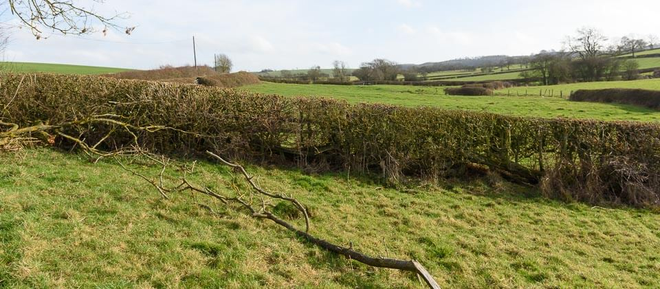 Another view of the same hedge, take off side.