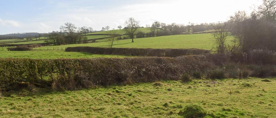 Hedge close the road.
