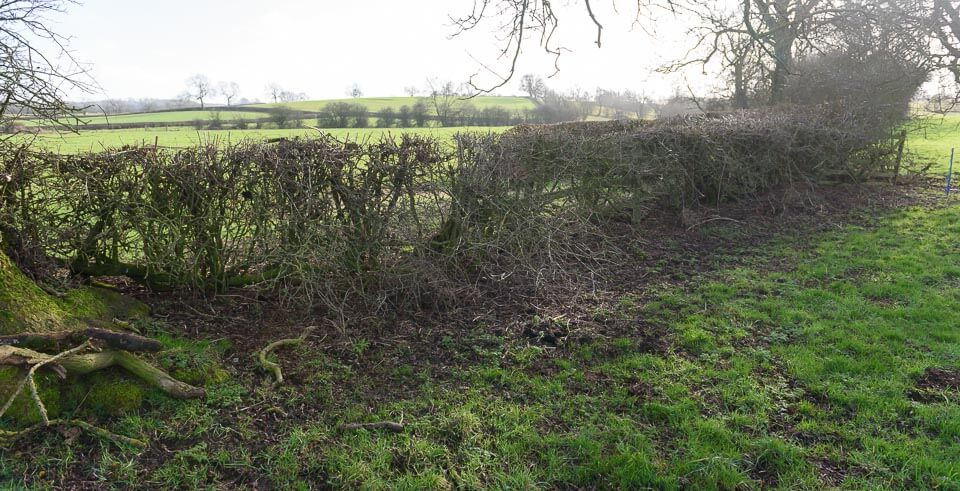 Hedges on the direct route.