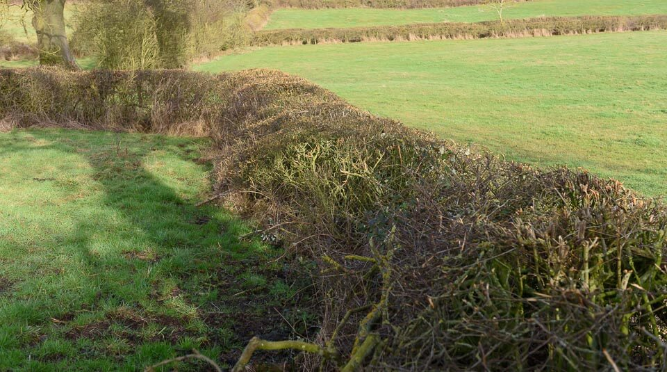 Hedge on the direct route.