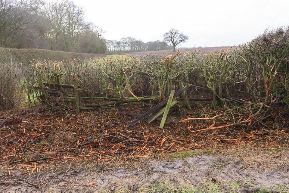 Last hedge before Gartree road crossing, landing side.