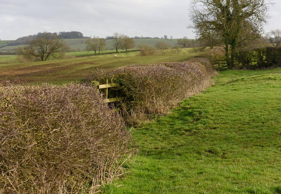 Hedge beyond gravel pits on right-hand (East) route to Turning Point 3