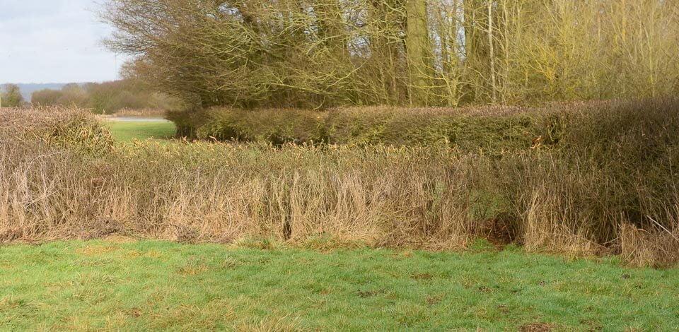 Last hedge before Gartree road crossing, take off side.