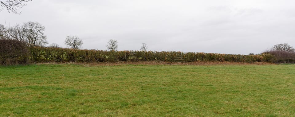 The last hedge on the course, beside Gartree Hill Farm.