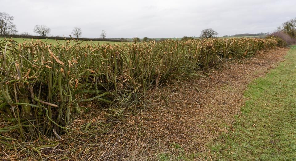 The last hedge on the course, beside Gartree Hill Farm. Take off side.