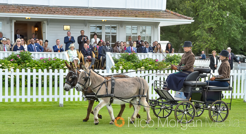 donkey drawn carriage and her majesty the queen - Her Majesty The Queen at The BDS Annual Show