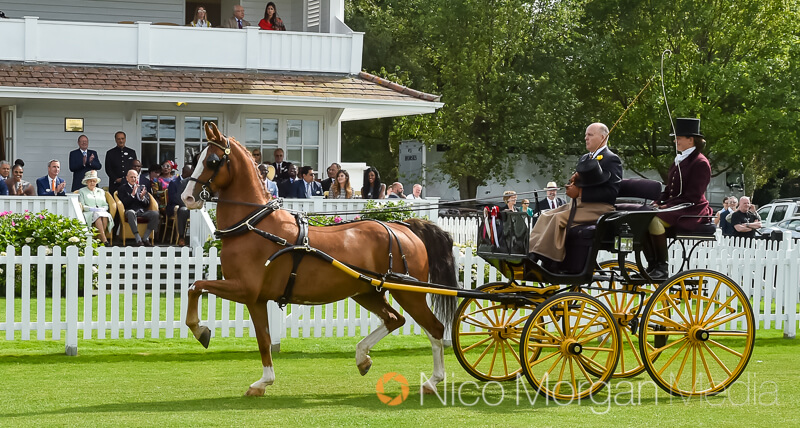 hackney horse drawn carriage her majesty the queen - Her Majesty The Queen at The BDS Annual Show