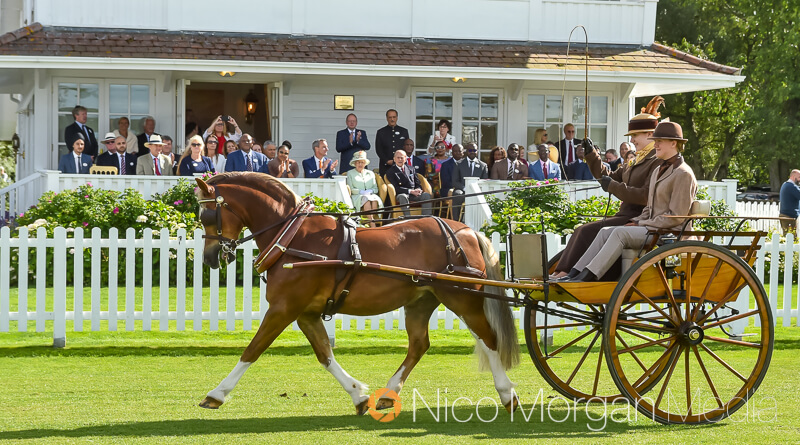 her majesty the queen at smiths lawn watching carriages - Her Majesty The Queen at The BDS Annual Show