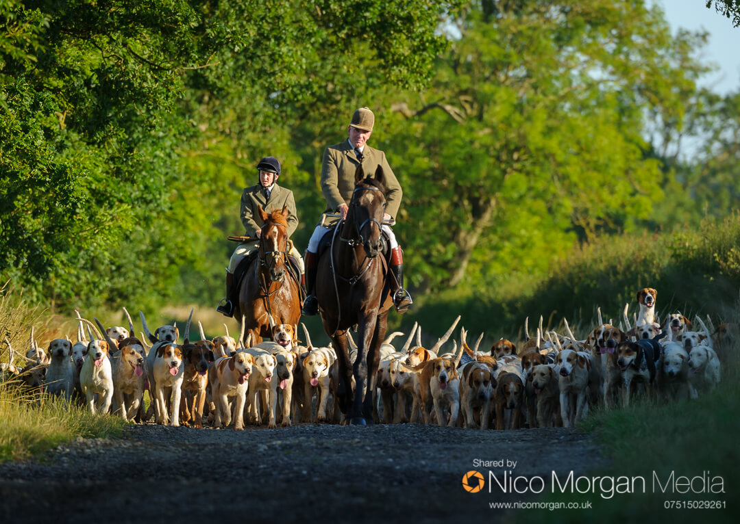 Cottesmore-Hunt-Hound-Exercise-31Jul17-011-2
