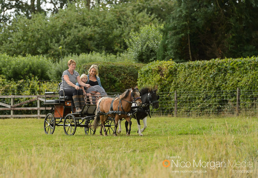 Pony and carriage rides were available in the field