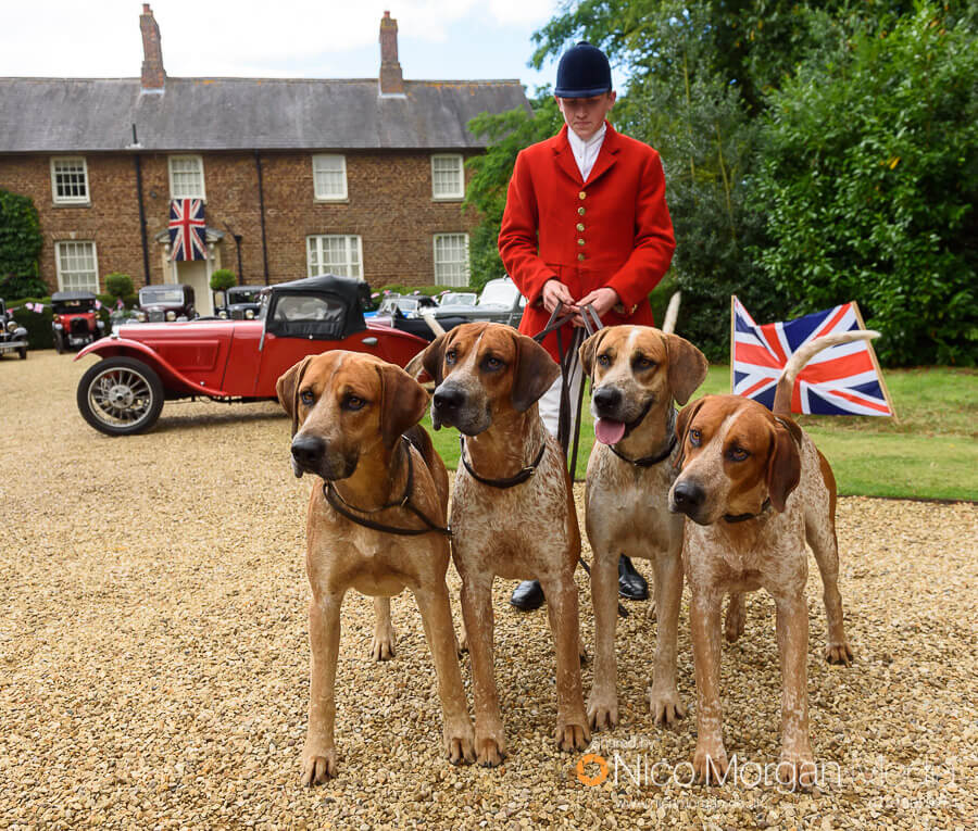 Cottesmore Hunt Whipper-In Hartley Crouch with some hounds