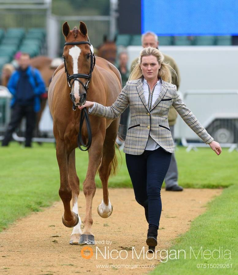Clare Abbott and Euro Prince. Clare won the HiHo Silver Best Dressed Lady award at the trot up.
