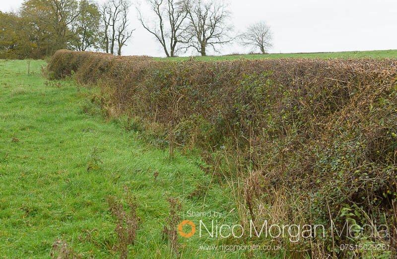 Melton Hunt Club Ride 2017: Fence 5 landing side