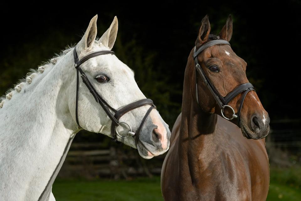 Emily Clark's horses